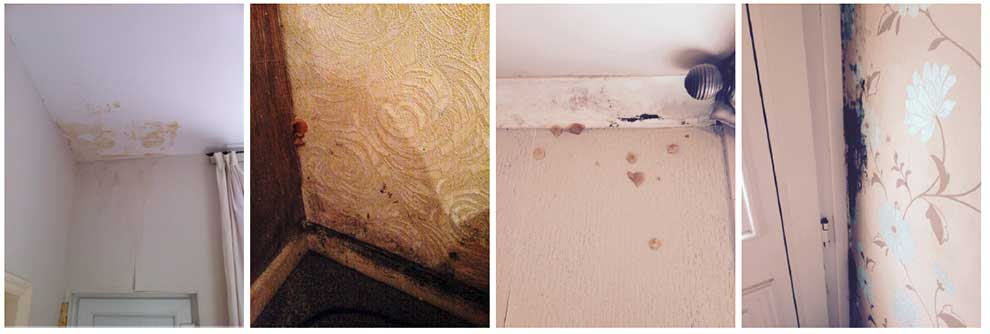(above) Evidence of water ingress and severe fungal growth inside the properties.